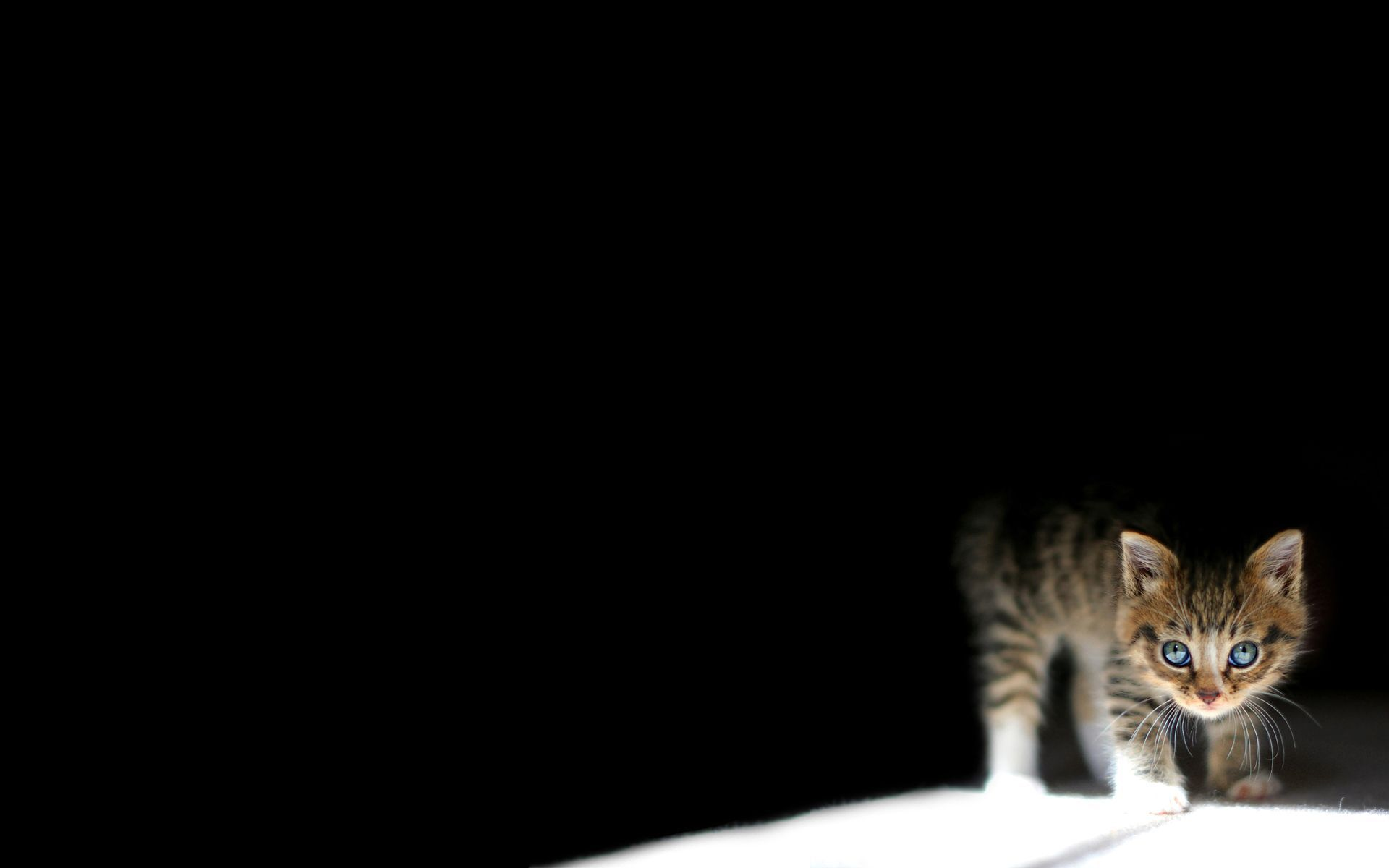 Cat Backgrounds Pictures - Wallpaper Cave