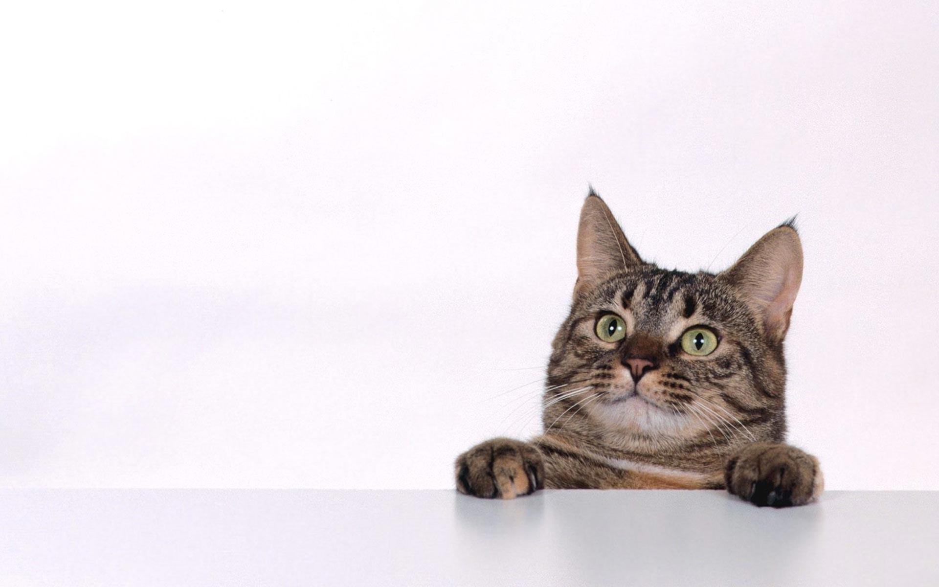 background cat