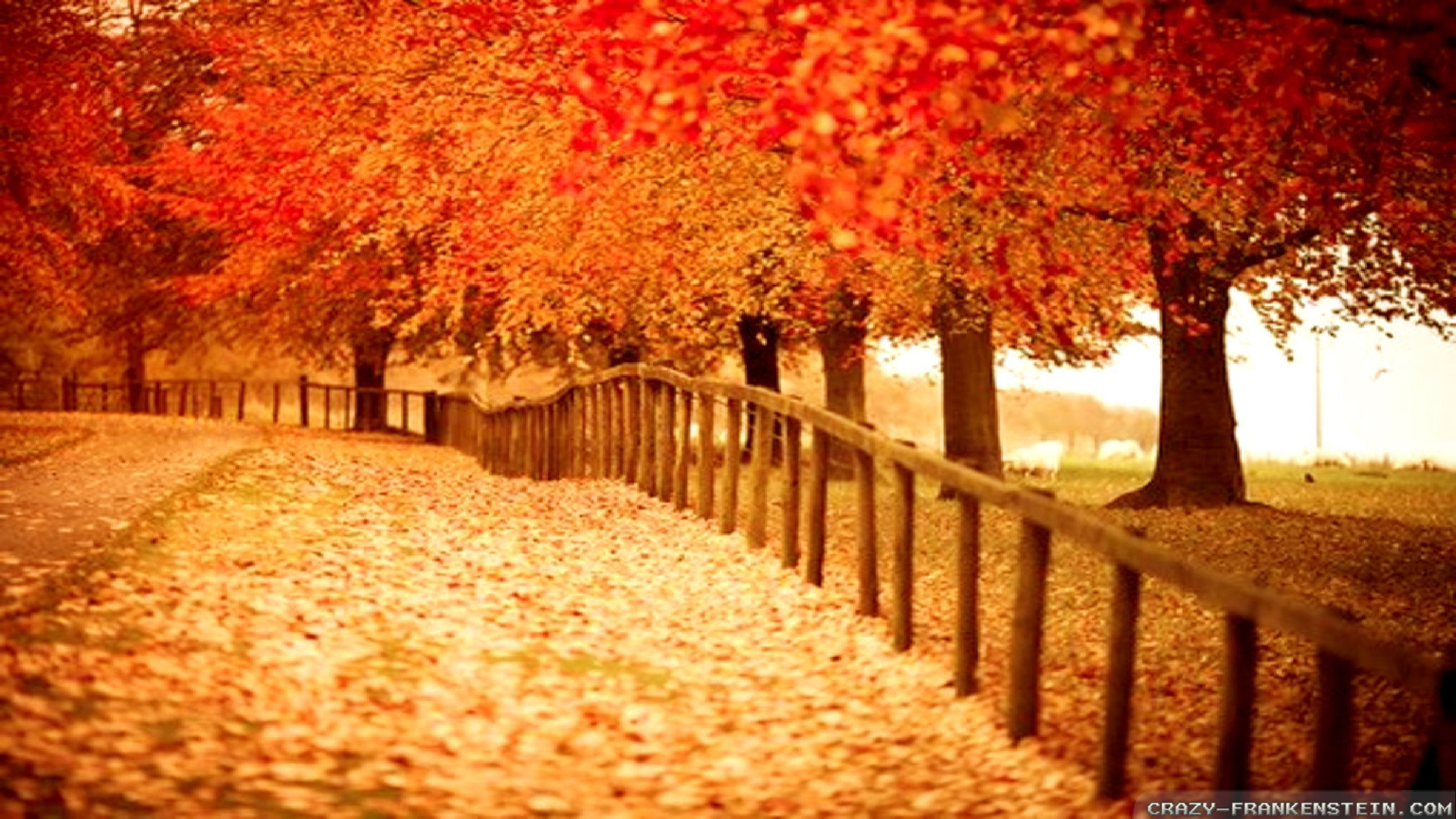 62 autumn desktop backgrounds free Pictures