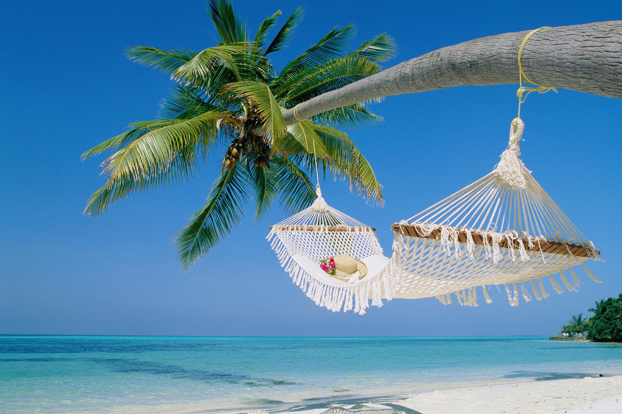 Tropical Island Beach Hammock - wallpaper