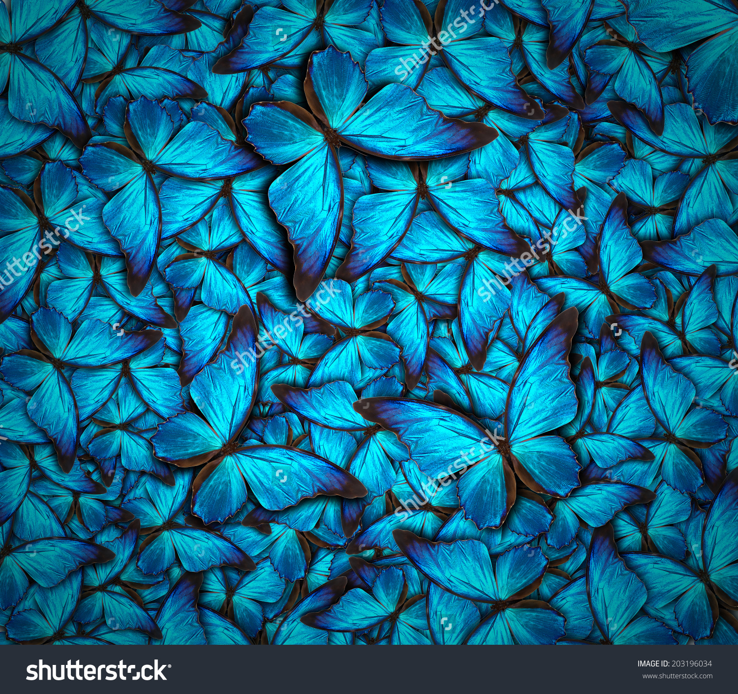 Beautiful Background Different Butterflys Stock Photo 203196034