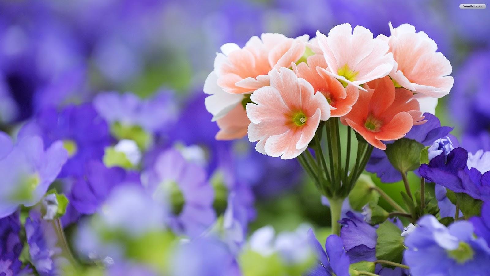 HD Flowers Wallpapers for Desktop - WallpaperSafari