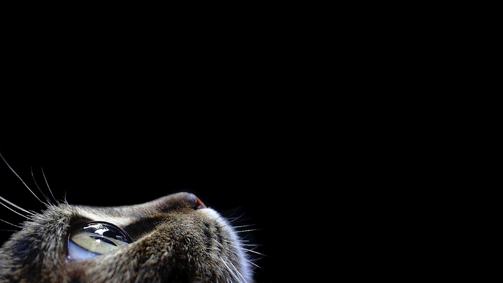 black cat desktop wallpaper 18
