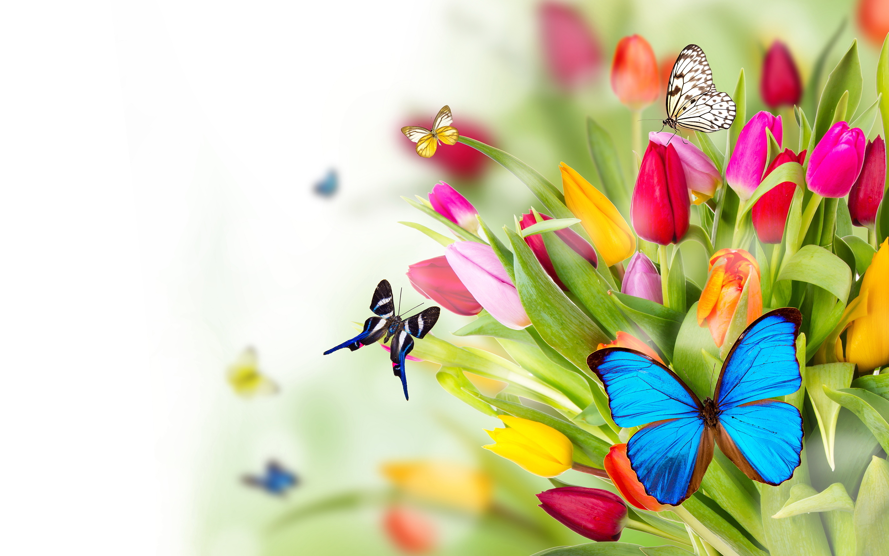 Top Beautiful Butterfly Pictures | Digiatto com | HD Wallpaper and