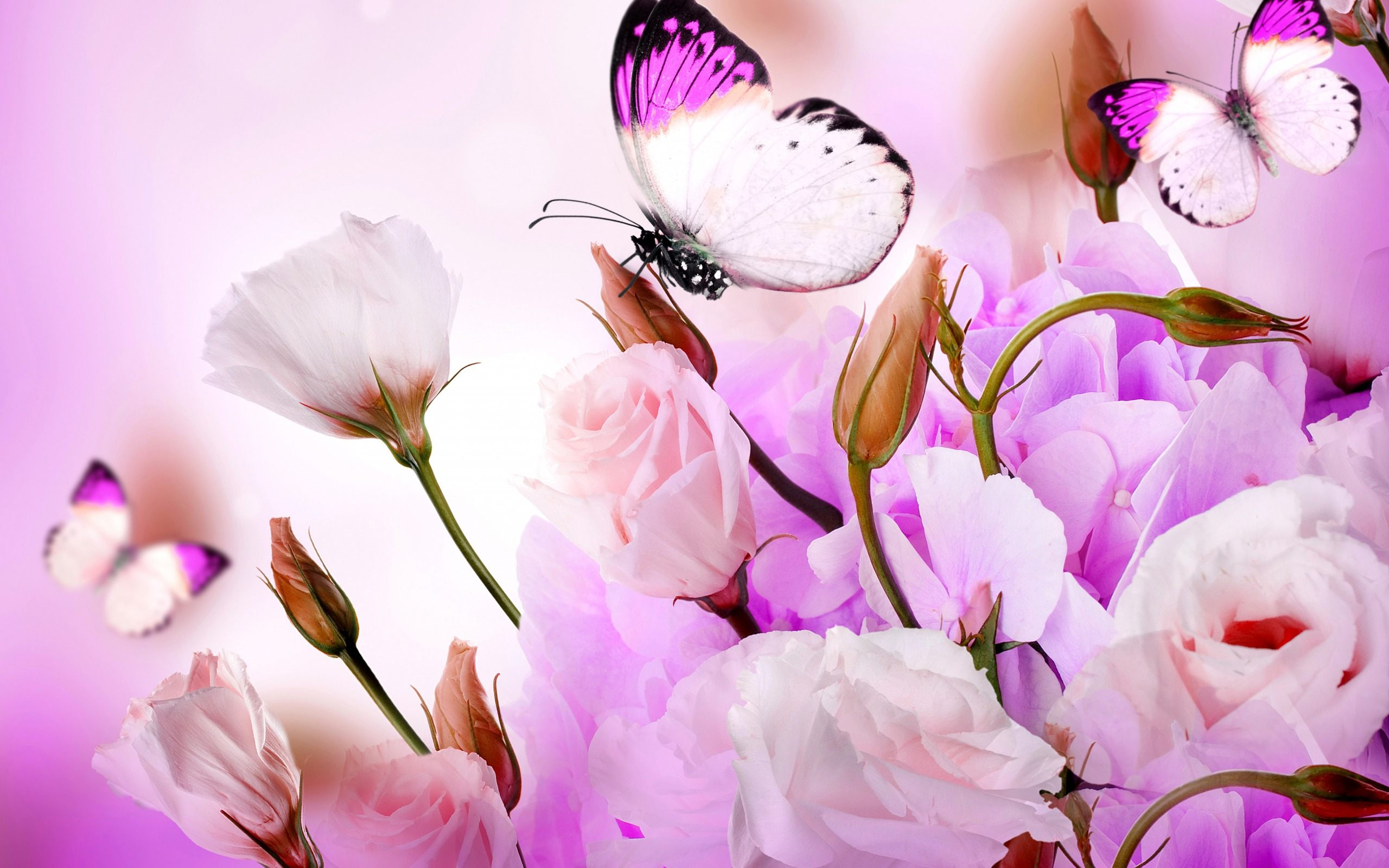 Flower With Butterfly Wallpaper HD Download High Quality