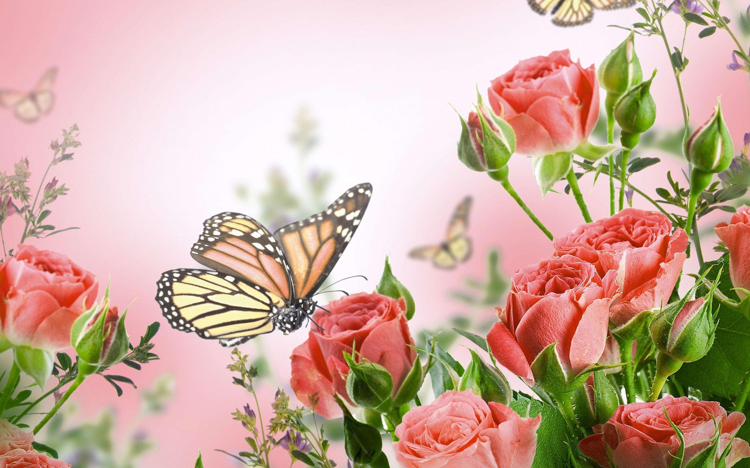 wallpaper: beautiful flower, red rose, butterfly, bokeh, buds