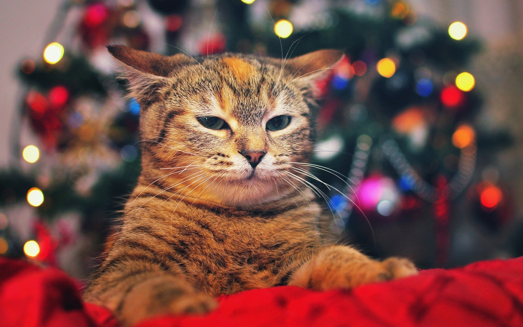 Cat Christmas Tree Lights HD Wallpaper - FreeWallsUp