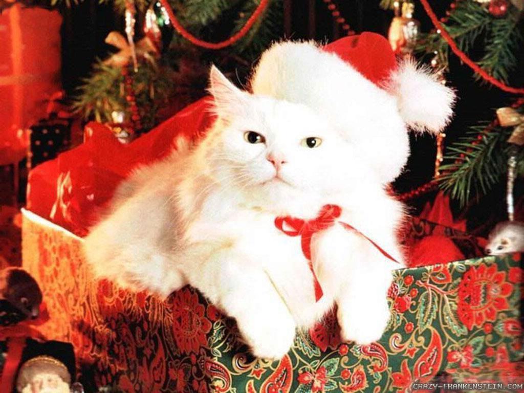 Black Cat Christmas Wallpaper - WallpaperSafari