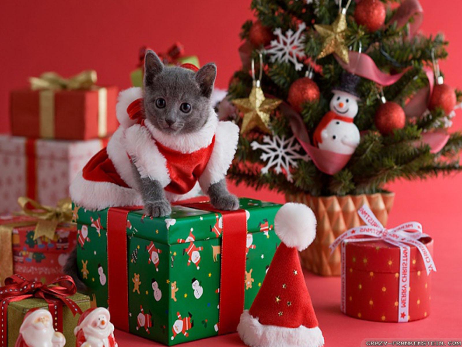 Christmas Cat wallpapers - Crazy Frankenstein