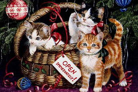 Free Desktop wallpaper for Cat lovers, Free Christmas Wallpapaer