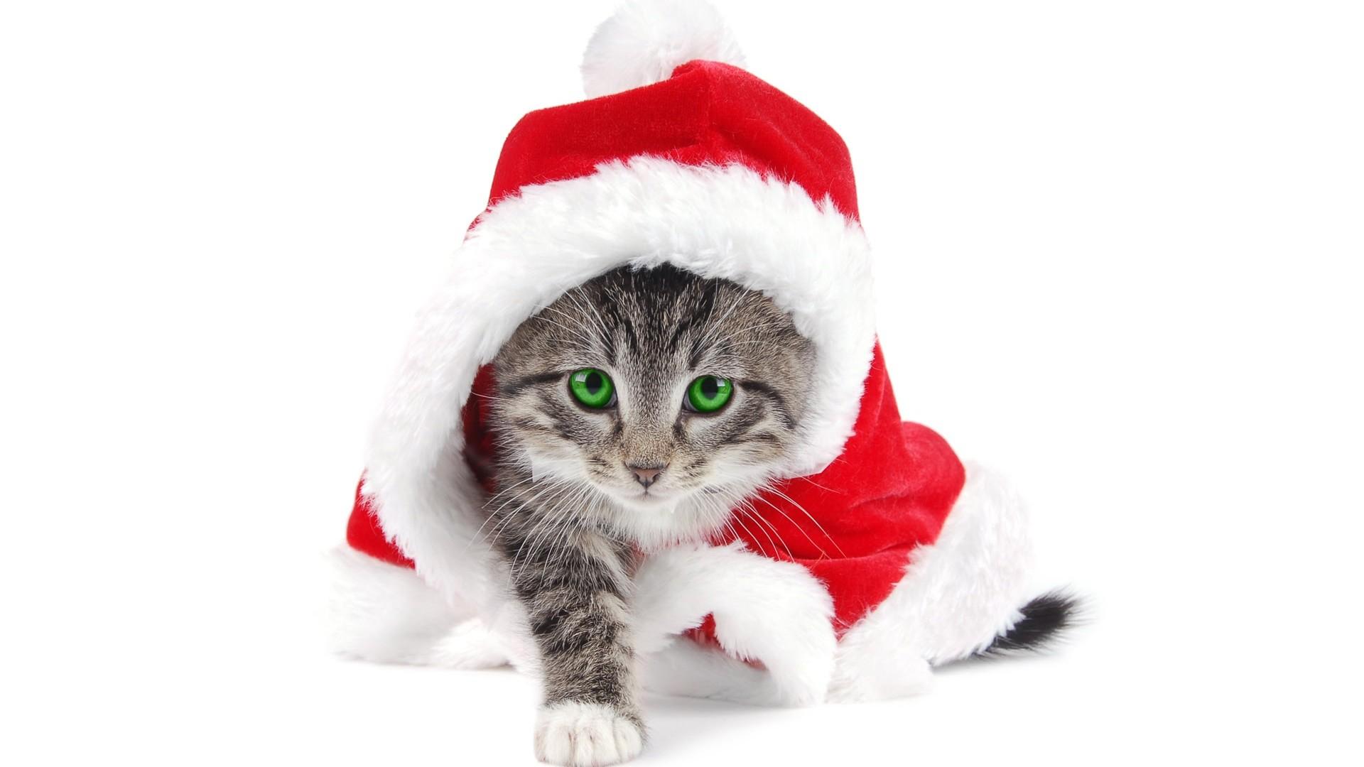 Cute Baby Cat Christmas Wallpaper Free Downloa #11467 Wallpaper