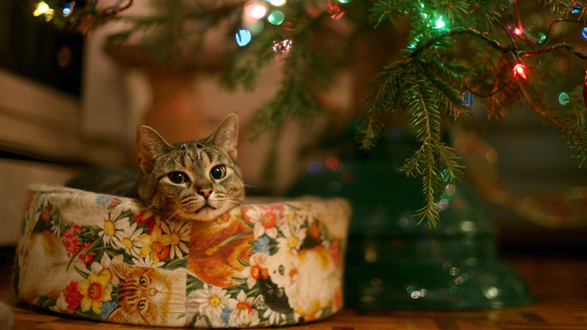 Christmas Cats Desktop Wallpapers - HD Wallpapers Pop