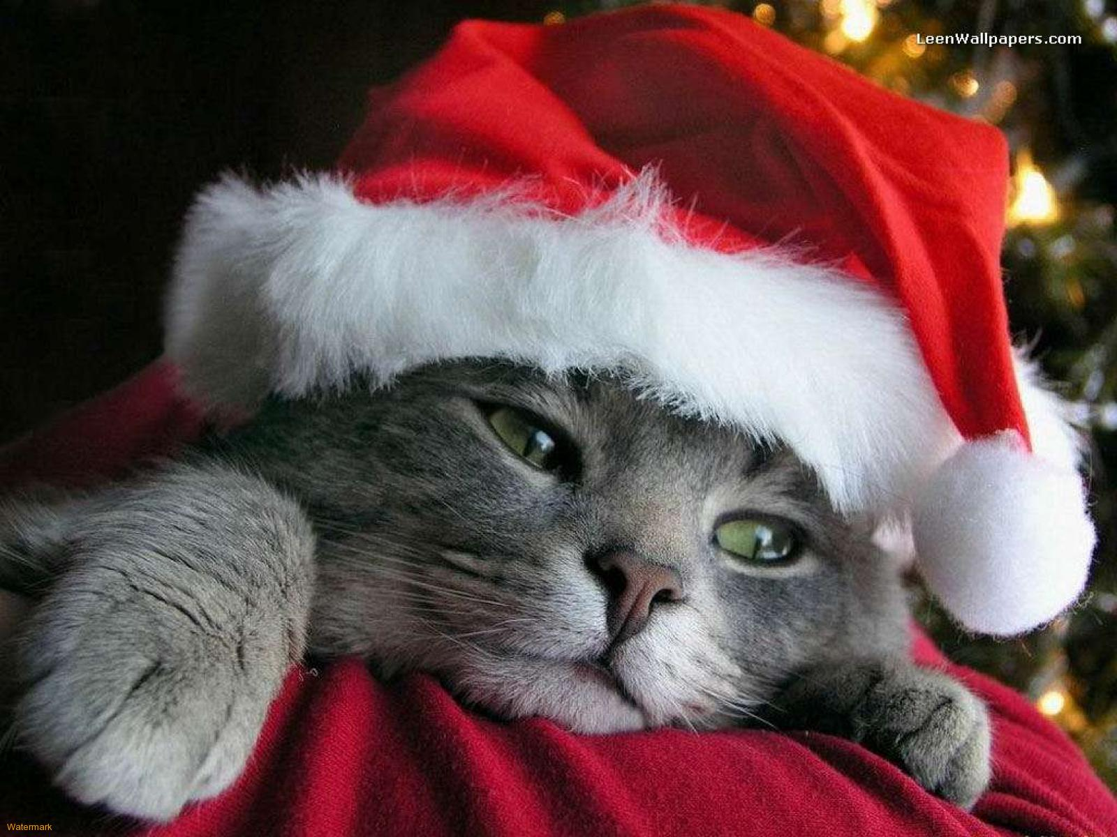 Christmas Kittens Wallpaper Page 1