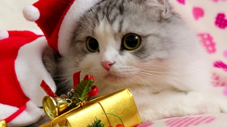 Collection of Christmas Kitten Wallpaper on HDWallpapers