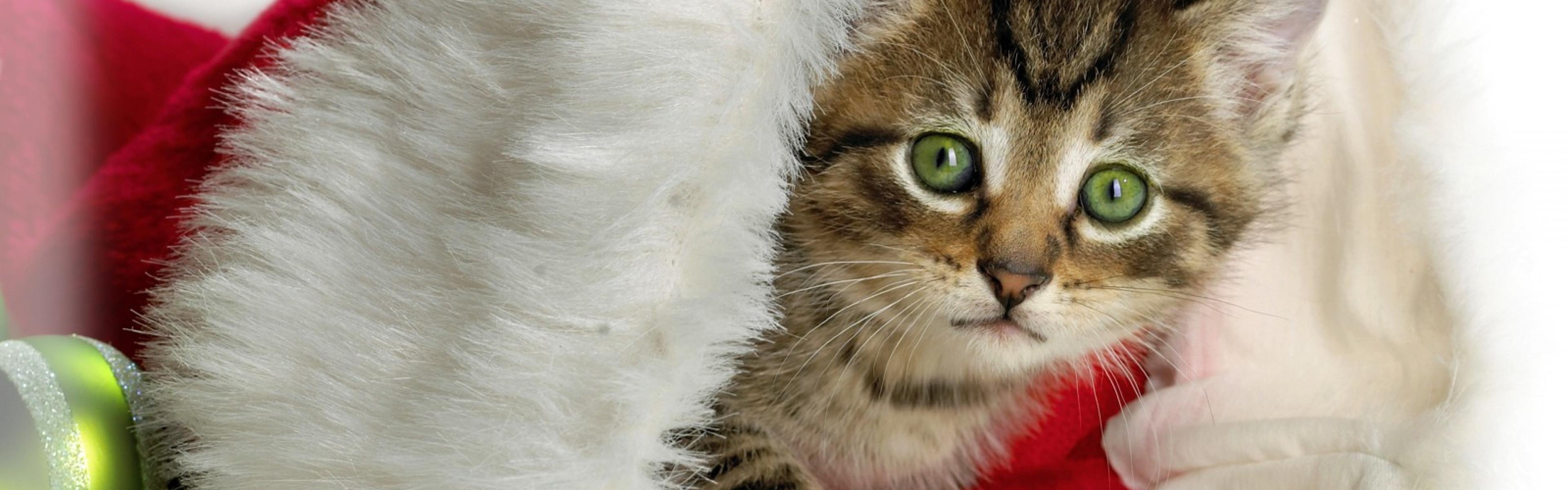 Christmas Kitten Wallpaper Page 1