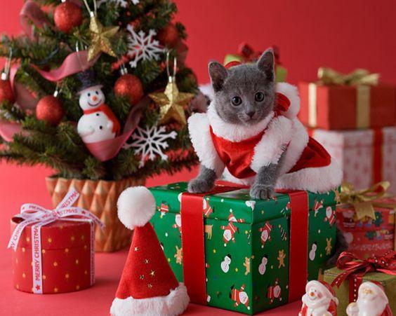 Christmas Kittens | Christmas Kittens Wallpaper For Desktop