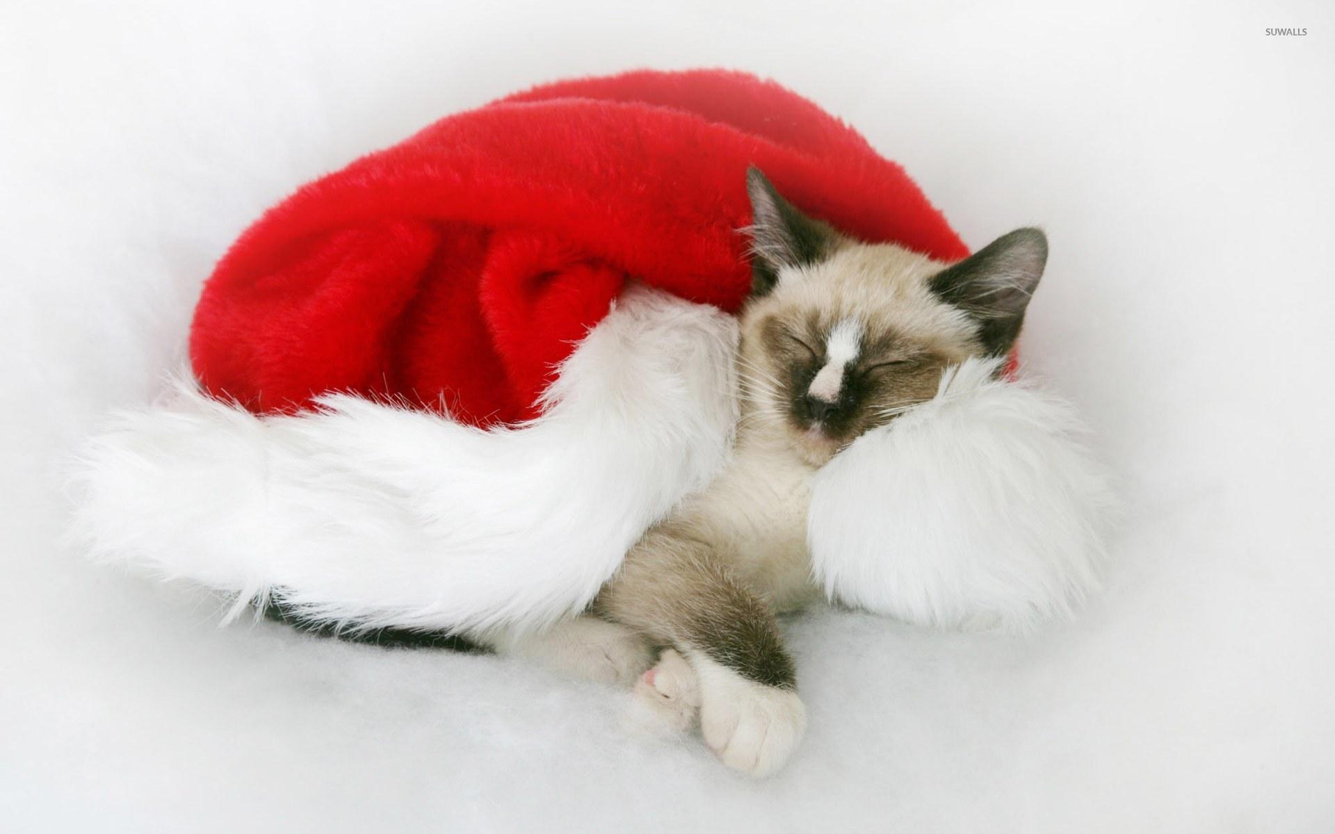 Christmas kitten wallpaper - Animal wallpapers - #9981