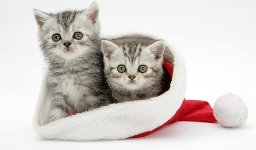 1000+ images about Christmas Cats Wallpapers on Pinterest