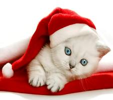 Download free christmas kittens wallpapers for your mobile phone