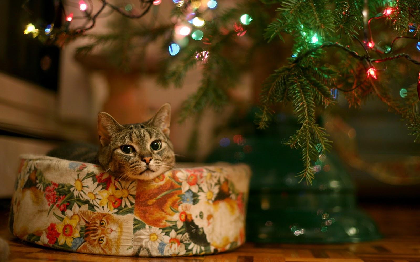 christmas kitten wallpaper 2017 - Grasscloth Wallpaper