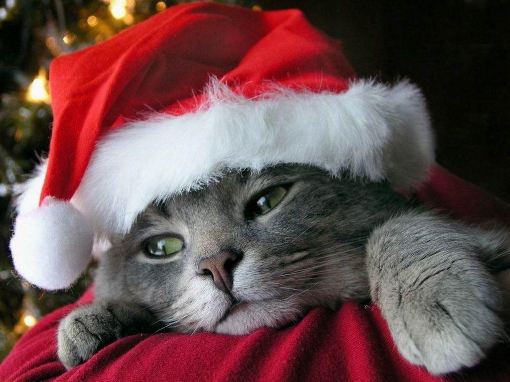 Christmas Kitten Wallpapers - Wallpaper Cave