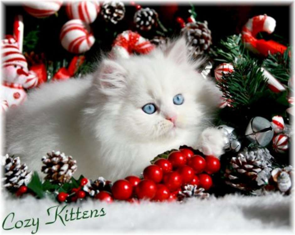 1000+ images about Christmas KIttens/Cats Wallpaper on Pinterest