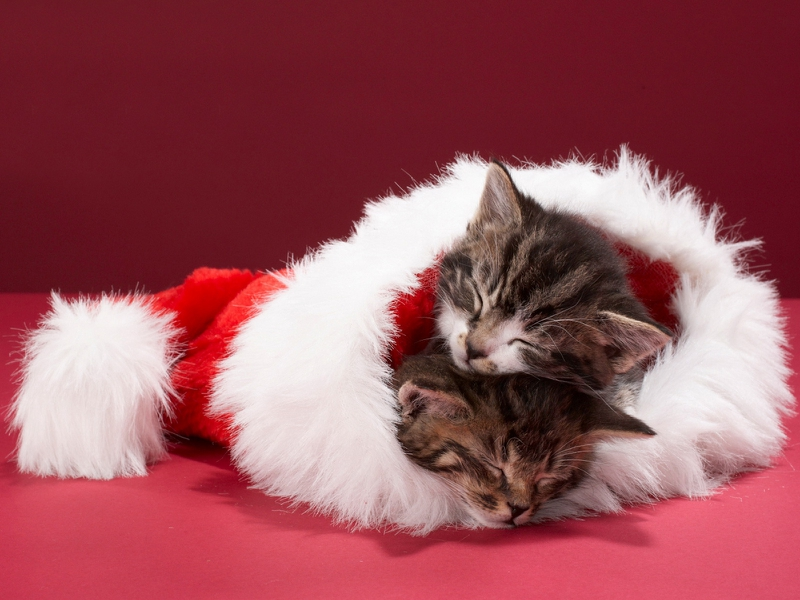 Christmas Kitten Wallpaper - WallpaperSafari