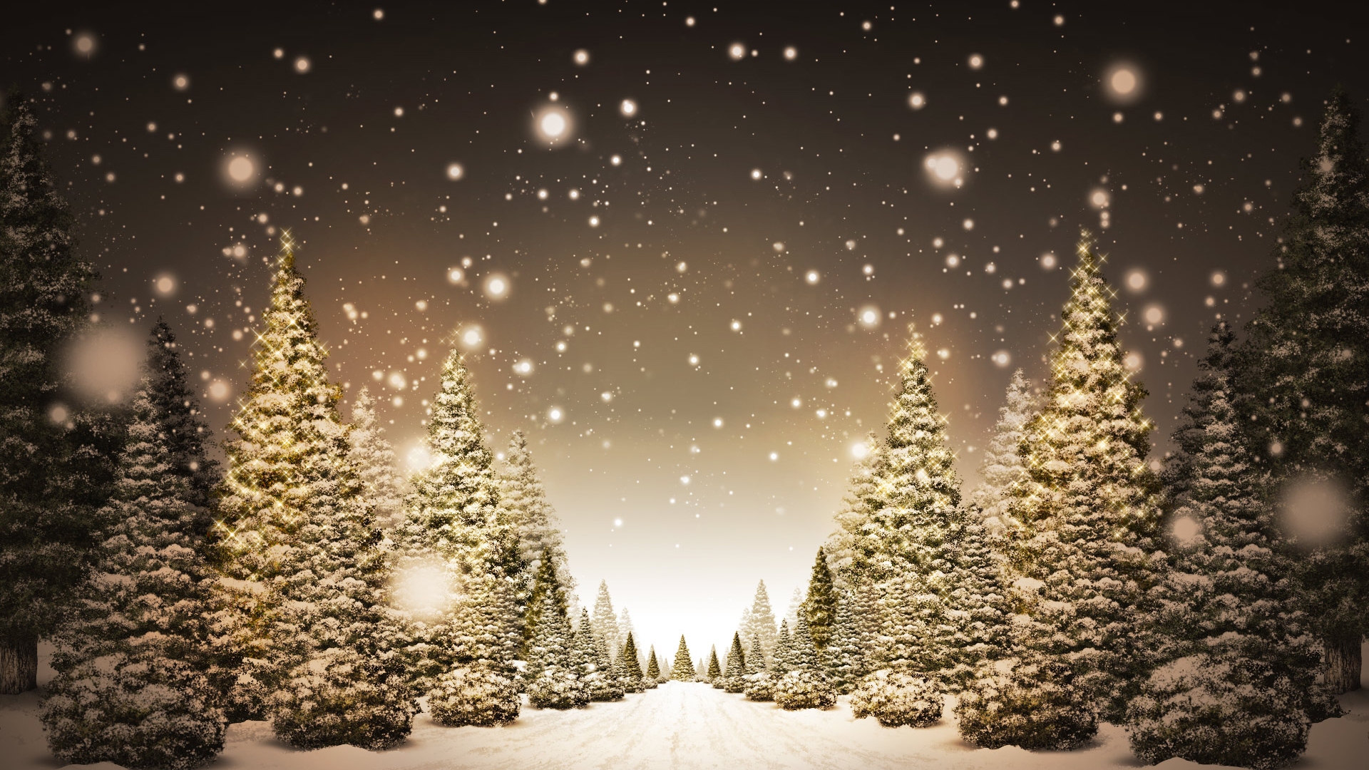 Christmas Trees in Snow HD Wallpaper » FullHDWpp - Full HD