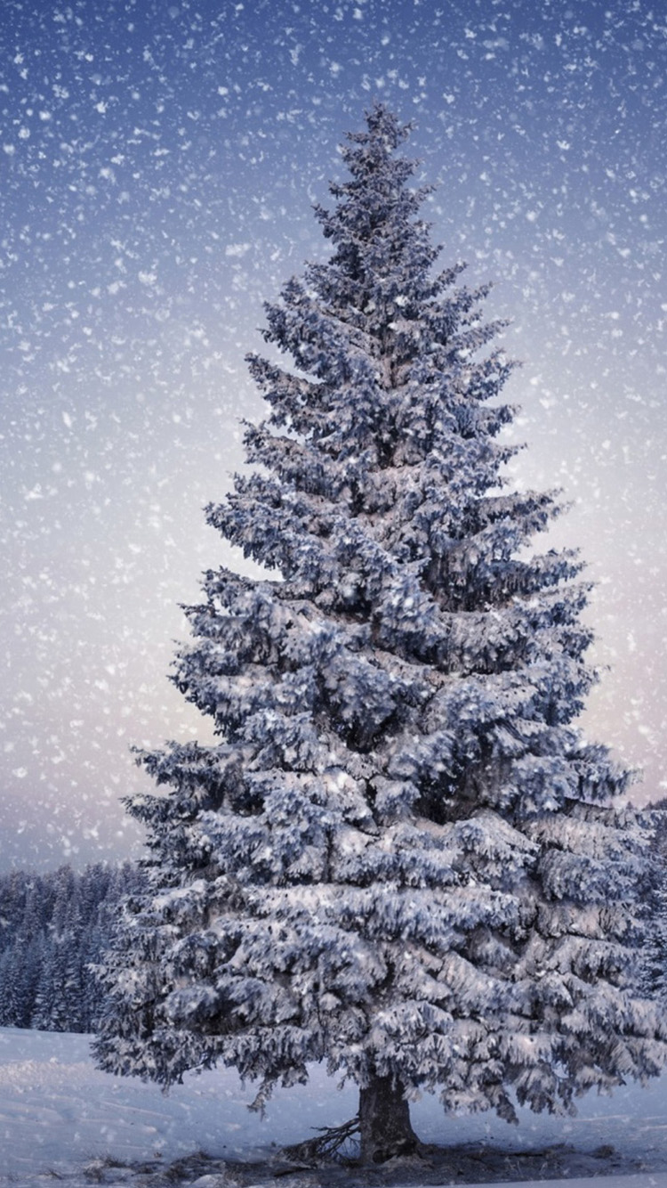 Christmas Tree In Snow Wallpapers - Mobile Wallpapers | HD Phone