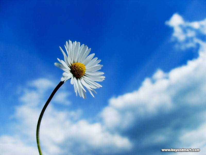 Collection of Desktop Wallpapers Flowers on HDWallpapers