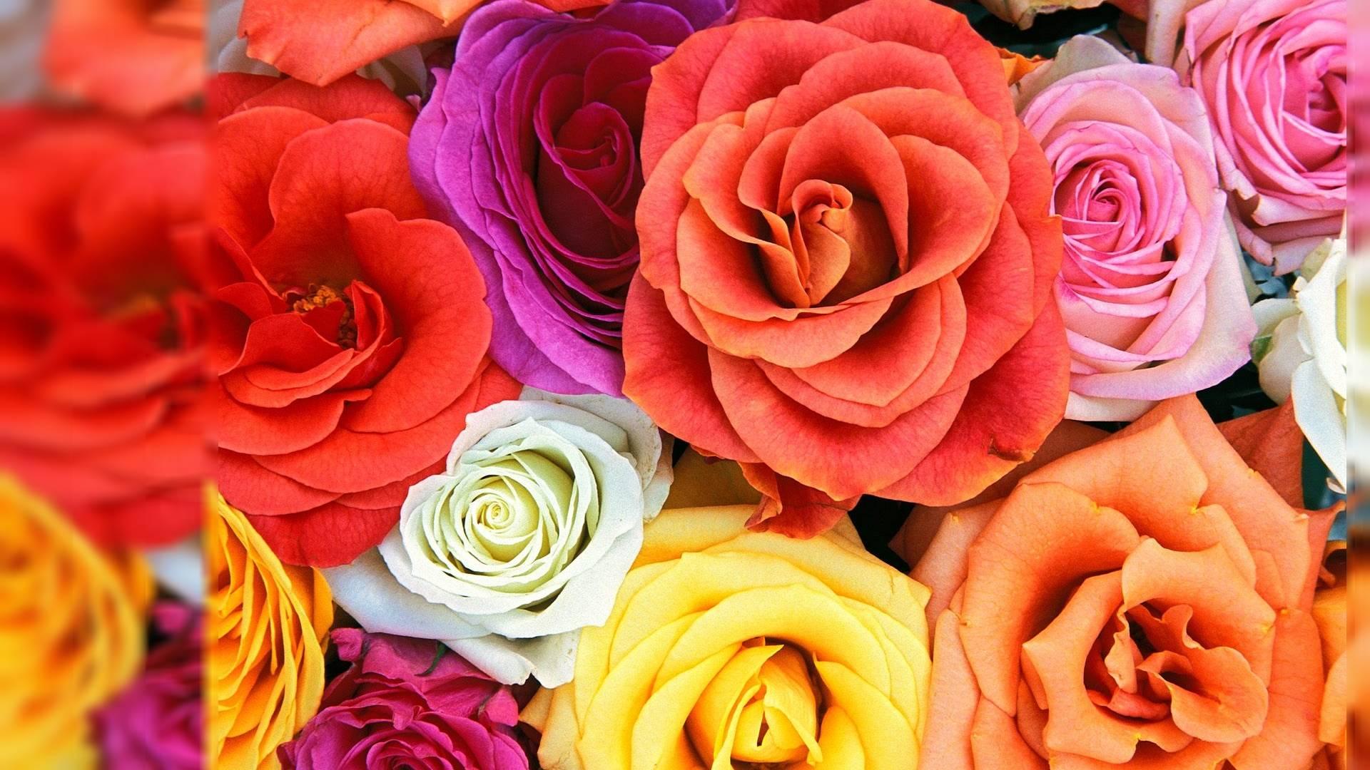 Wallpapers For Desktop Flowers (84+)
