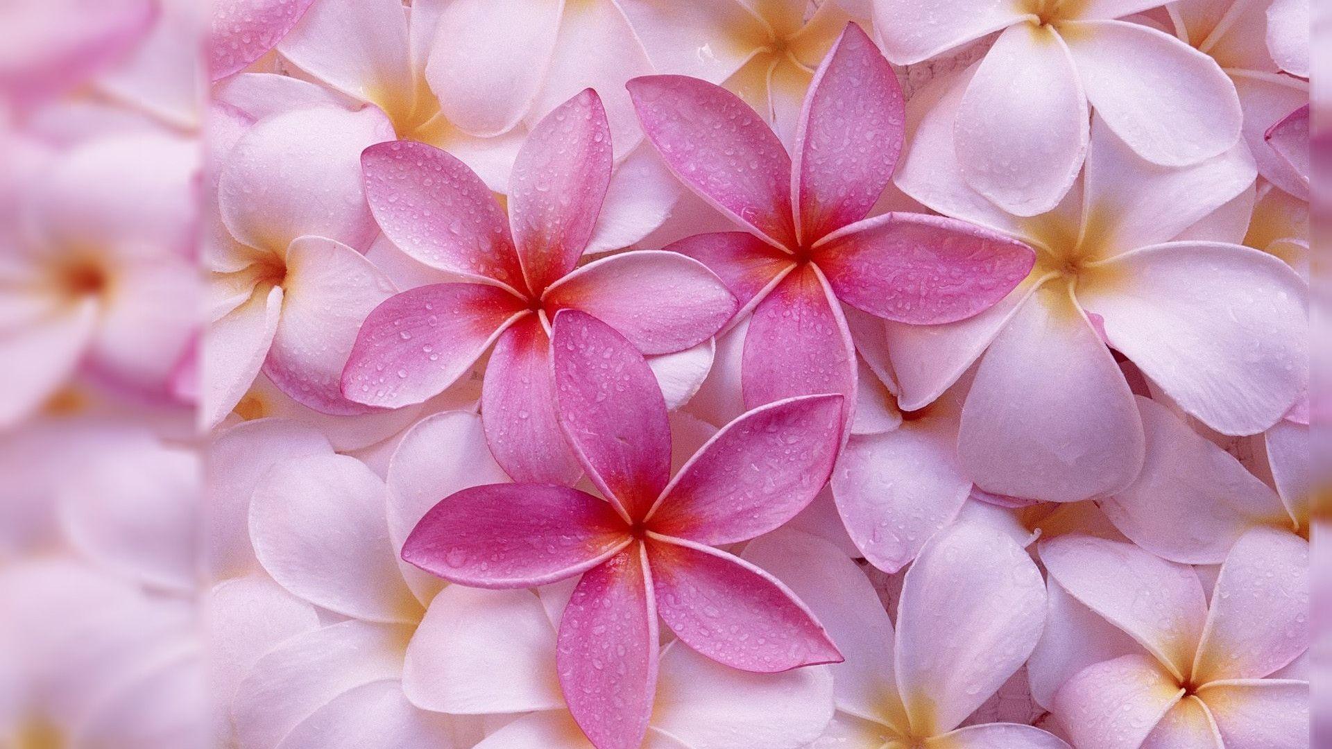 Desktop Backgrounds Flowers - Wallpaper Cave