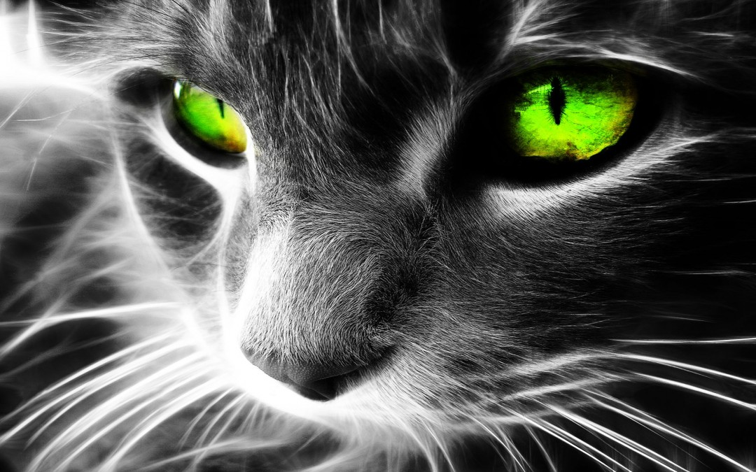 1000+ images about My cool Pictures on Pinterest   Cats, Cool