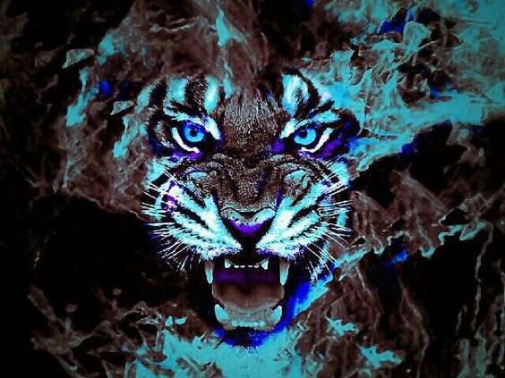 Cool Tiger Wallpapers Sf Wallpaper
