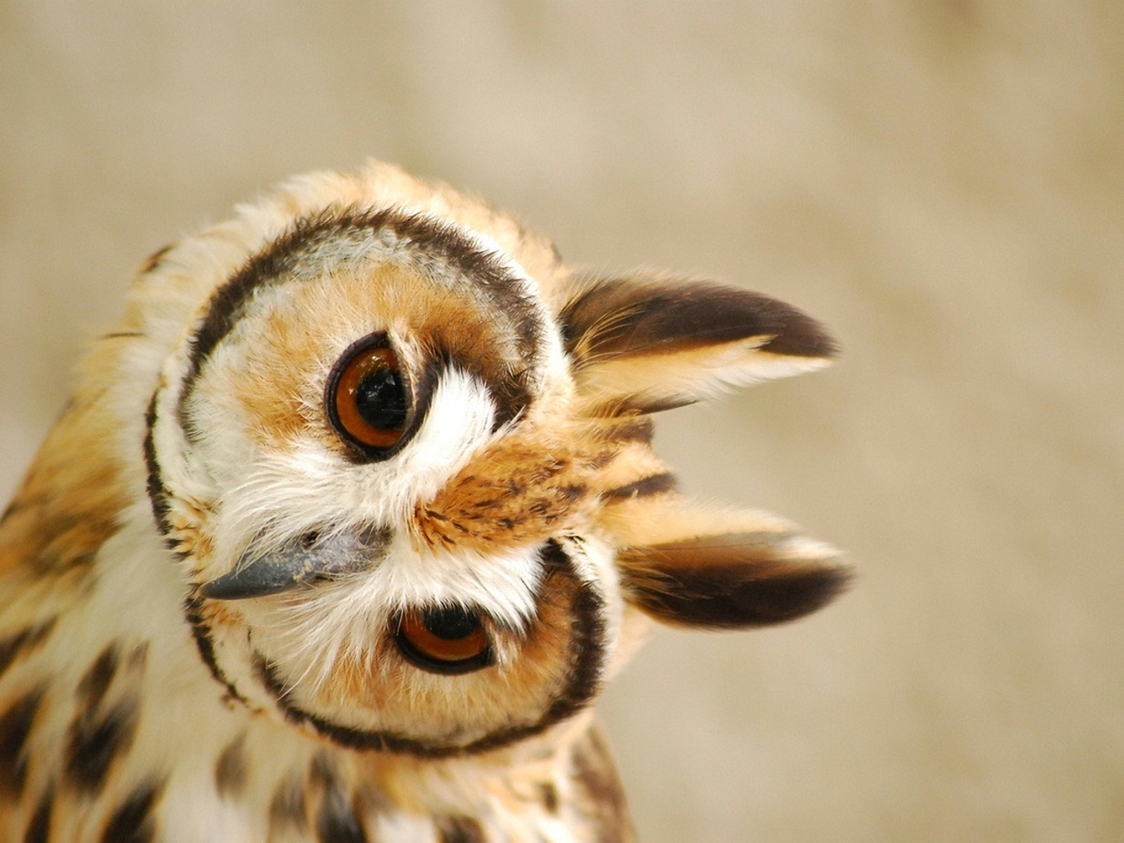 78 Best images about owls on Pinterest   Cute owl drawing, Couple