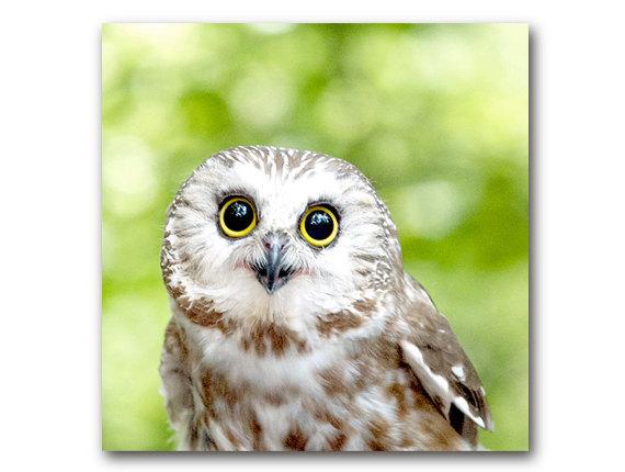 78+ ideas about Cute Owl Photo on Pinterest   Snowy owl, White