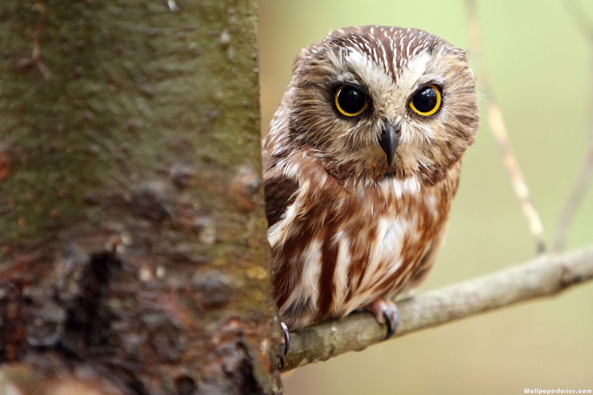 Cute Owl Pictures, Fine Images of Cute Owl Full HD   LanLinGLaureL