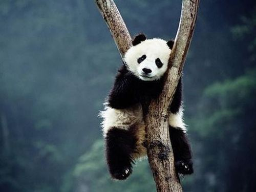 Cute Panda Bear Photo Gallery : theBERRY