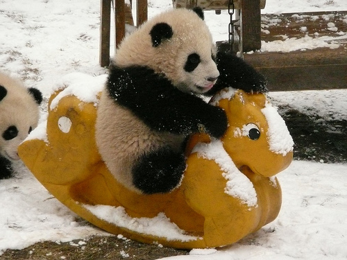 Beautiful Pictures images Cute Panda wallpaper and background
