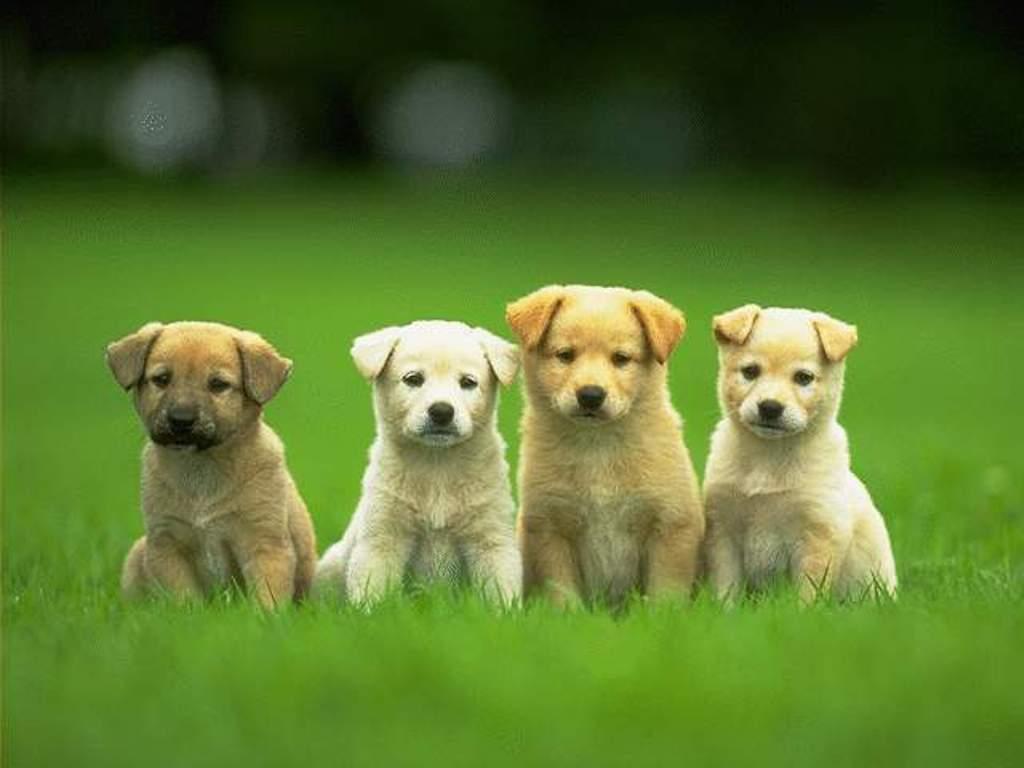 Cute Puppies Wallpapers HD - Wallpaper Cave