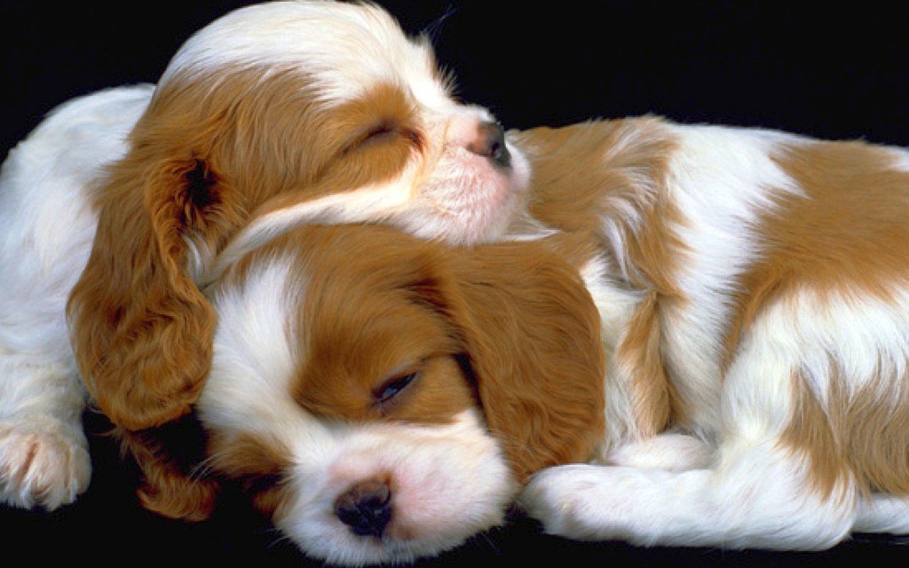 hd puppies pictures, puppies images, puppy photos, puppies
