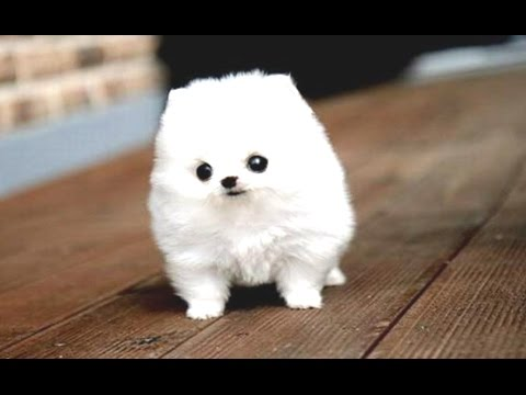 Funny Puppies And Cute Puppy Videos Compilation 2016 [BEST OF