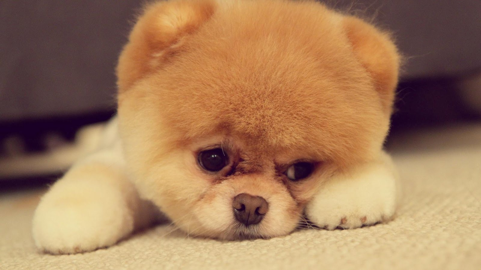 Cute Puppy Pictures - Android Apps on Google Play