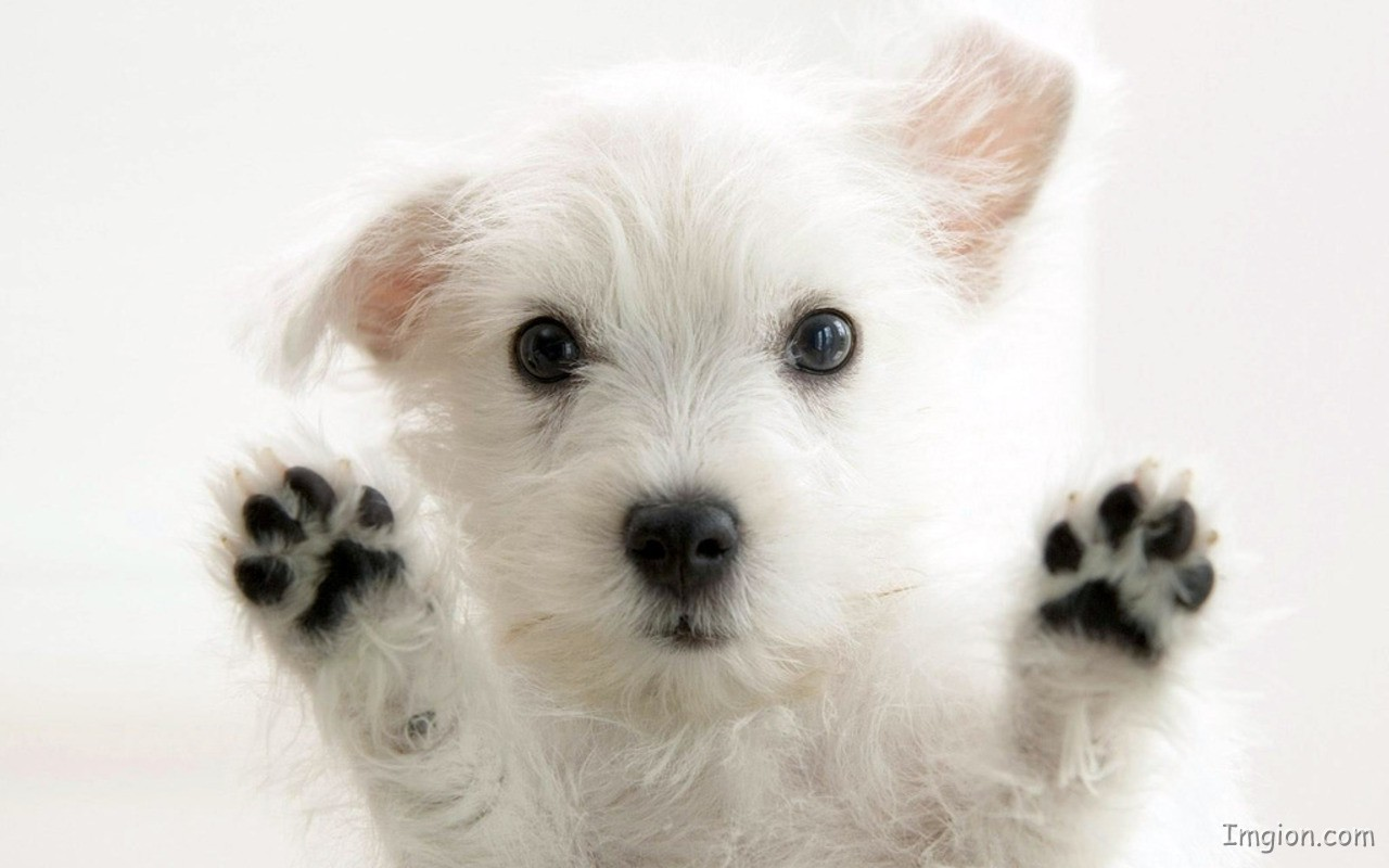 10+ images about Cute Puppy on Pinterest | Boo puppy, Hopscotch