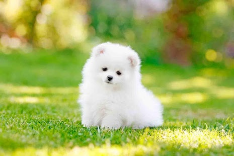 Cute Puppy Images, Cute Puppy Backgrounds Pack V 25FI, LL GL