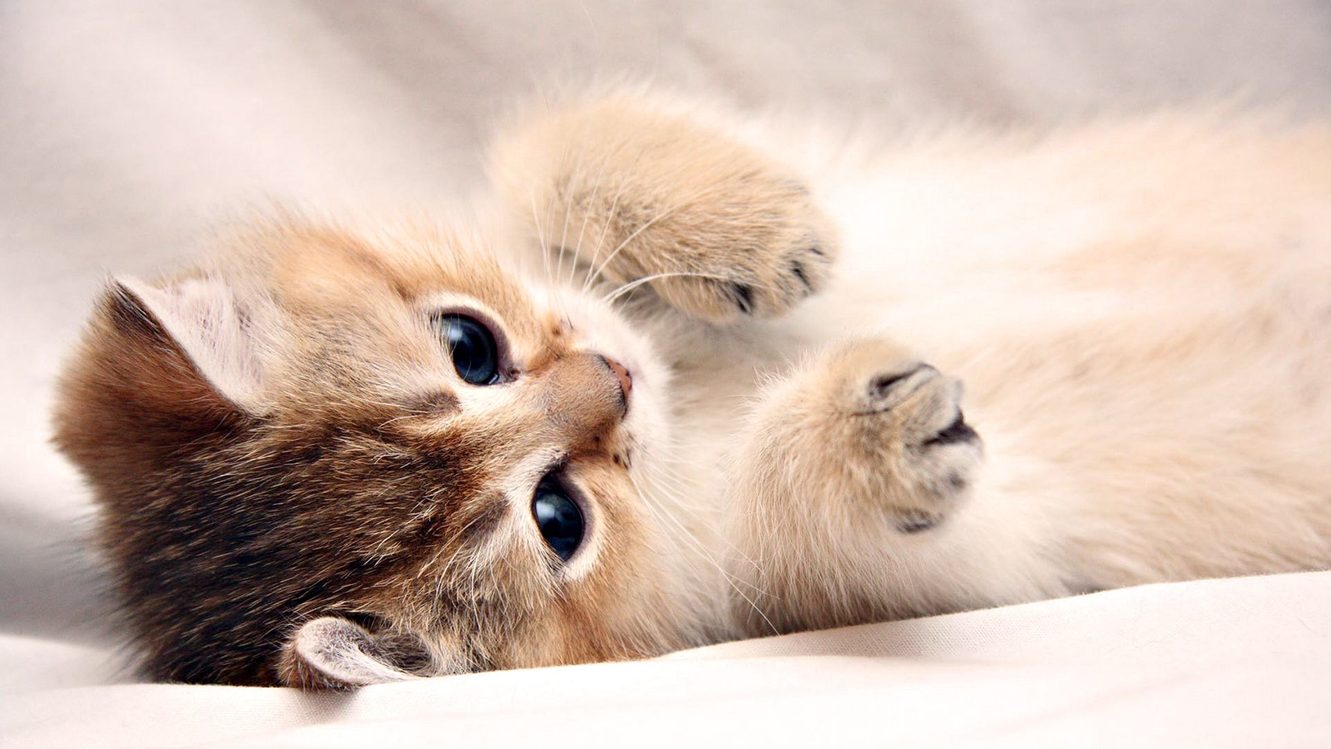 Cute Wallpapers For Laptop - Wallpaper Cave