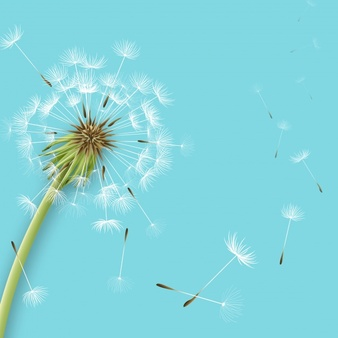 Dandelion Vectors, Photos and PSD files | Free Download