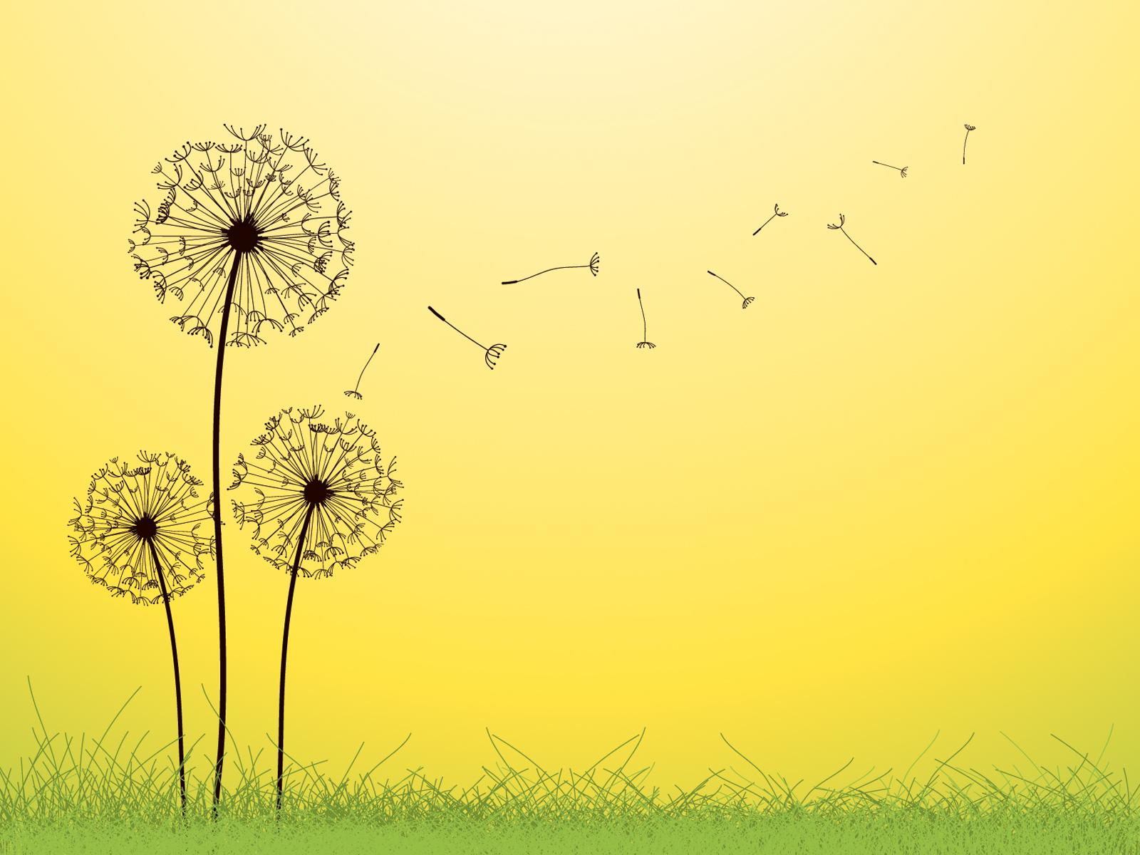 Dandelion Backgrounds - WallpaperPulse