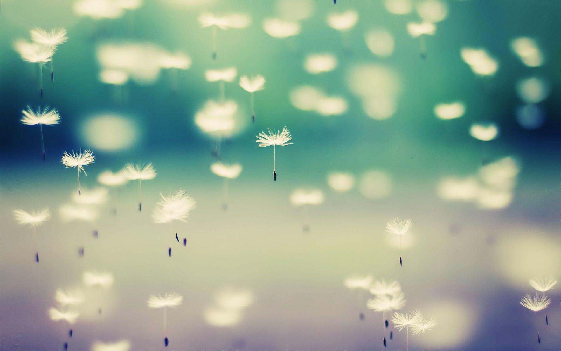 Dandelion Backgrounds - WallpaperSafari