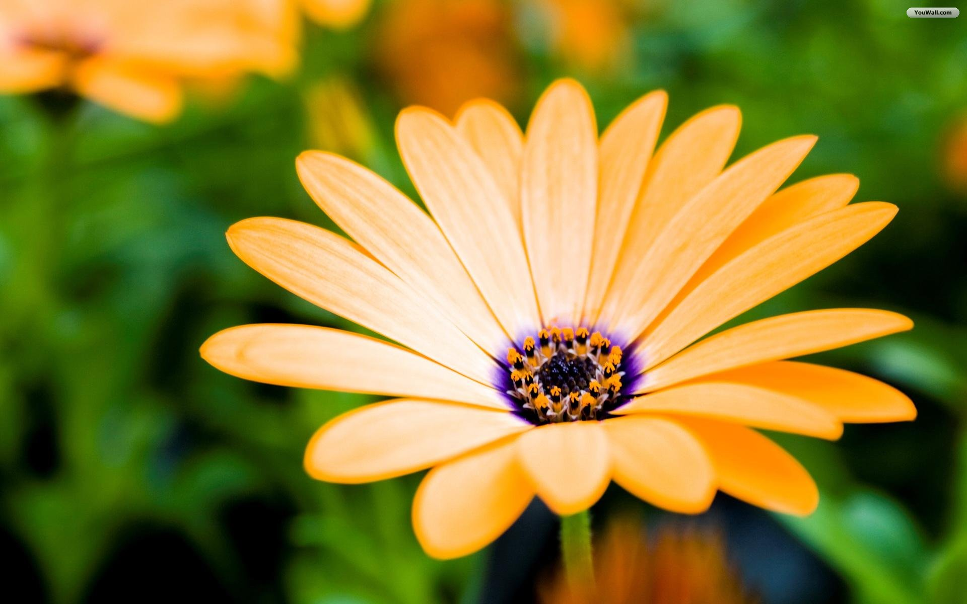 Beautiful Desktop Wallpaper Flowers | Hd Wallpaper Full